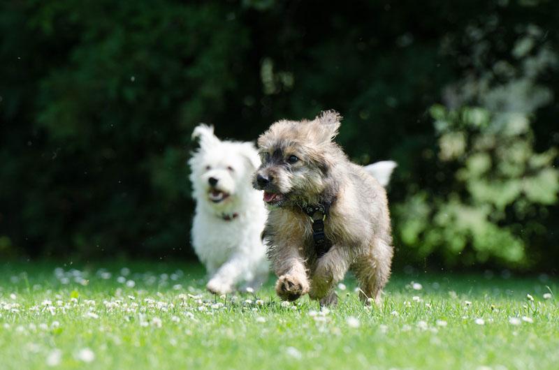 Training puppies under 16 weeks